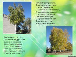 Люблю березу русскую, Она всегда с подружками Весною хороводится, Целуется,