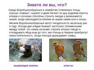 Знаете ли вы, что? Среди Воробьинообразных в семействе Оляпковых птицы хорошо