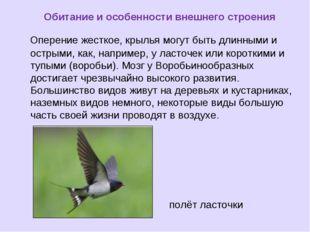 Обитание и особенности внешнего строения Оперение жесткое, крылья могут быть