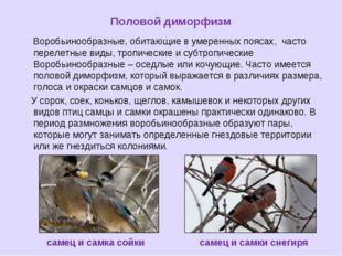 Половой диморфизм Воробьинообразные, обитающие в умеренных поясах, часто пере