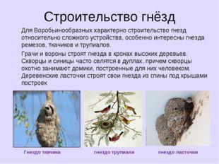 Строительство гнёзд Для Воробьинообразных характерно строительство гнезд отно