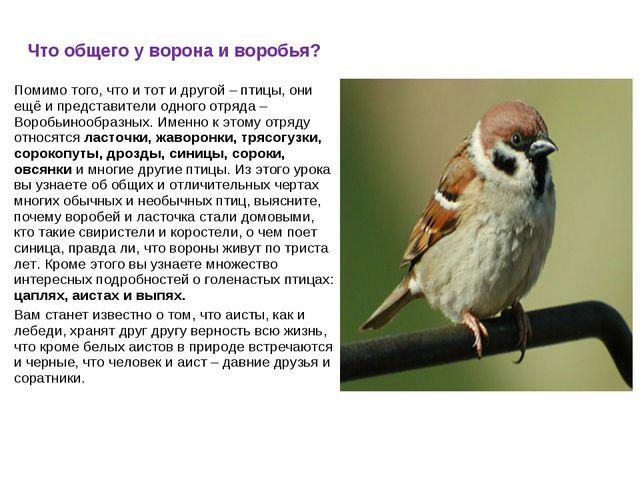 Что общего у ворона и воробья? Помимо того, что и тот и другой – птицы, они е...
