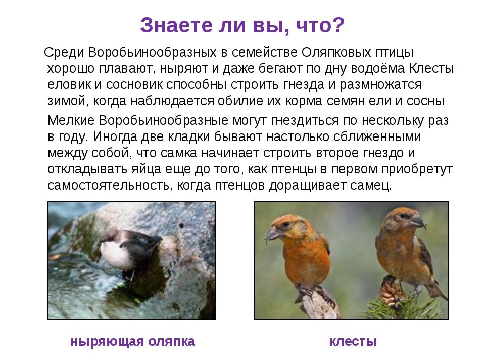 Знаете ли вы, что? Среди Воробьинообразных в семействе Оляпковых птицы хорошо...