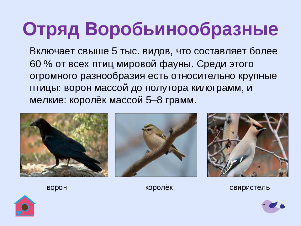 Отряд Воробьинообразные Включает свыше 5 тыс. видов, что составляет более 60...