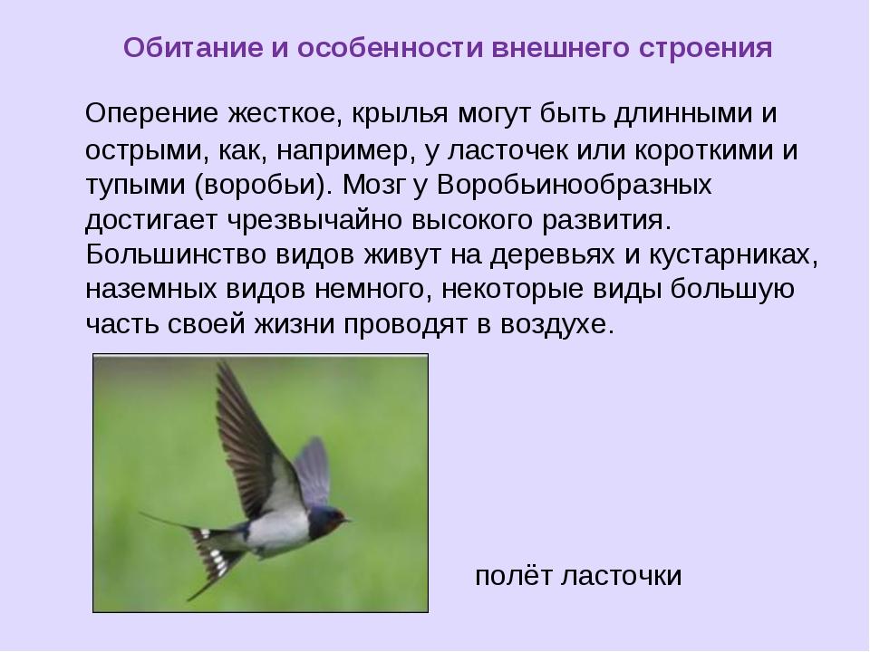 Обитание и особенности внешнего строения Оперение жесткое, крылья могут быть...