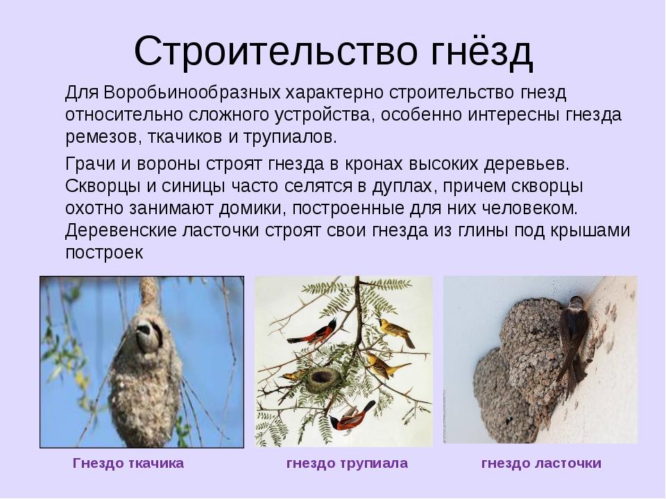 Строительство гнёзд Для Воробьинообразных характерно строительство гнезд отно...
