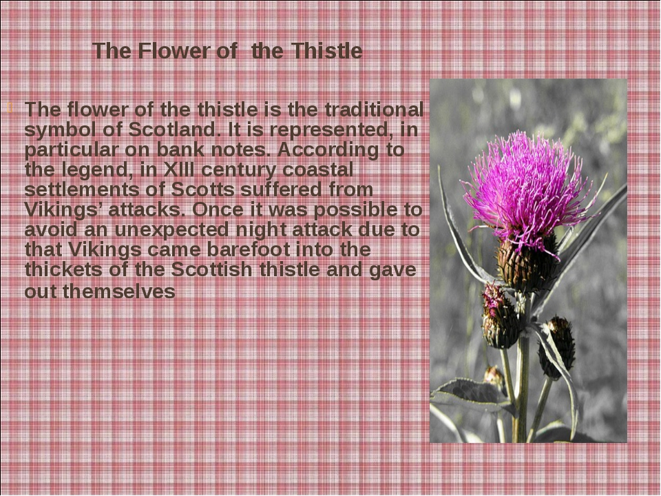 The Flower of the Thistle The flower of the thistle is the traditional symbo...