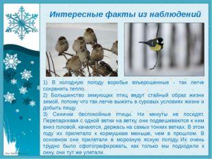 Интересные факты из наблюдений 1) В холодную погоду воробьи взъерошенные - та