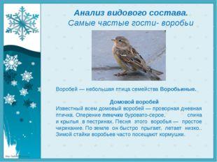 Анализ видового состава. Самые частые гости- воробьи Воробей — небольшая птиц