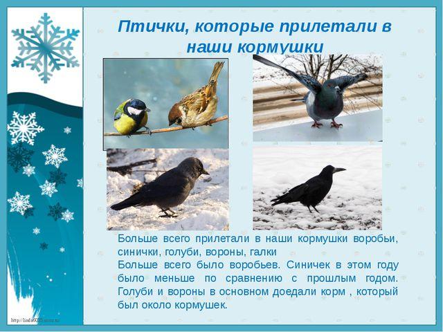Птички, которые прилетали в наши кормушки Больше всего прилетали в наши корму...
