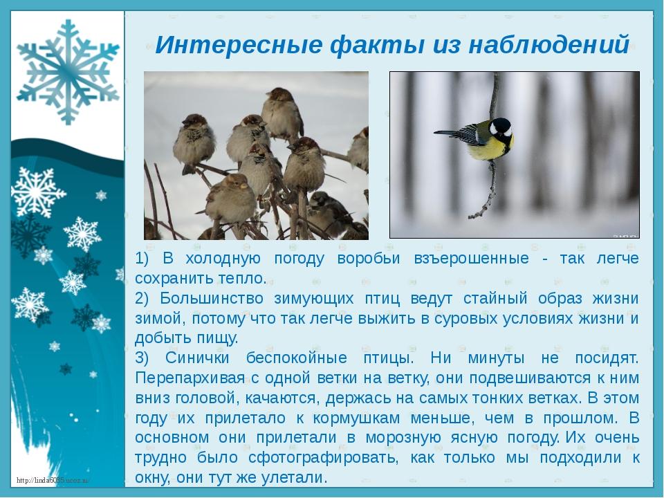 Интересные факты из наблюдений 1) В холодную погоду воробьи взъерошенные - та...