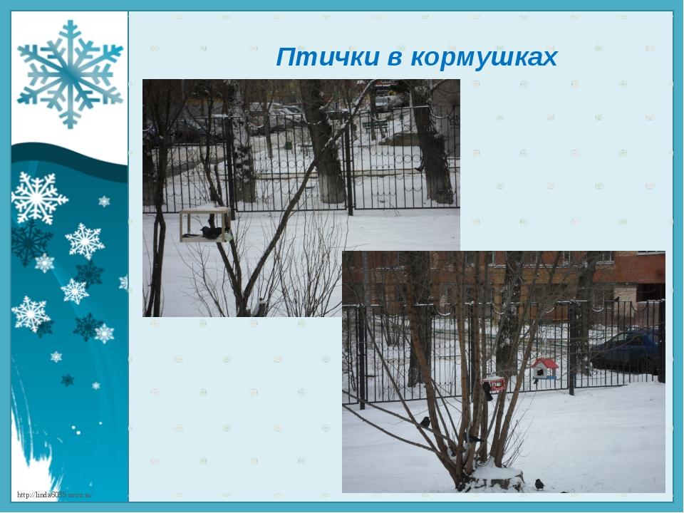 Птички в кормушках http://linda6035.ucoz.ru/