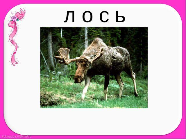 л о с ь