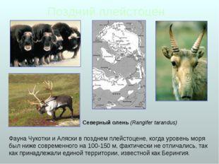 Поздний плейстоцен Фауна Чукотки и Аляски в позднем плейстоцене, когда уровен