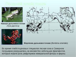 Поздний плейстоцен Во время плейстоценовых гляциалов лесная зона в Северном п