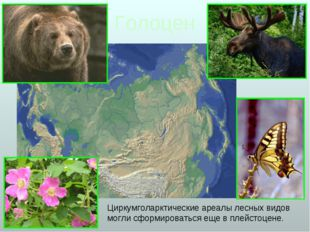 Голоцен Циркумголарктические ареалы лесных видов могли сформироваться еще в п