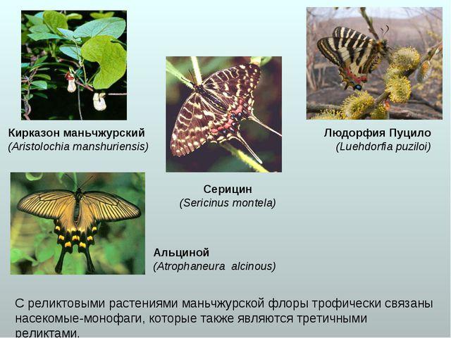 С реликтовыми растениями маньчжурской флоры трофически связаны насекомые-моно...