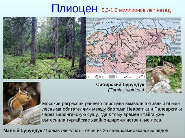 Плиоцен Морские регрессии раннего плиоцена вызвали активный обмен лесными оби...