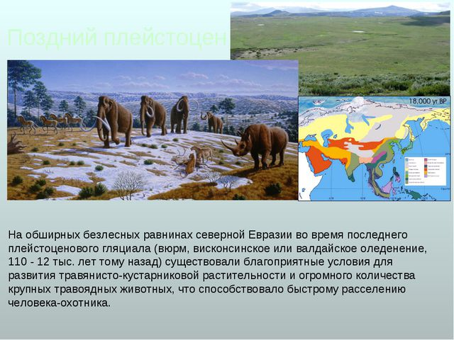 Поздний плейстоцен На обширных безлесных равнинах северной Евразии во время п...