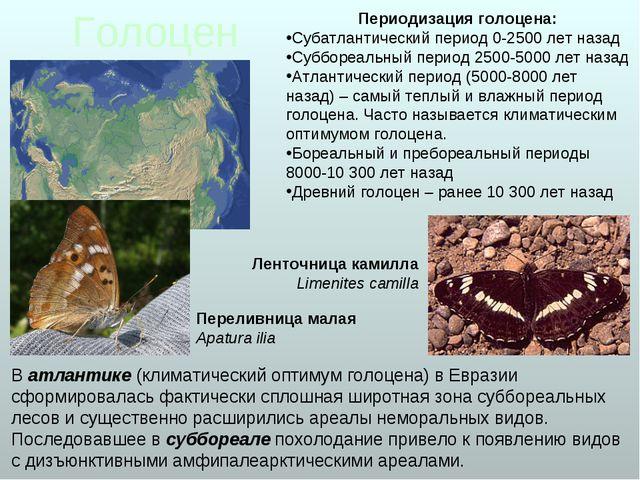 Голоцен В атлантике (климатический оптимум голоцена) в Евразии сформировалась...