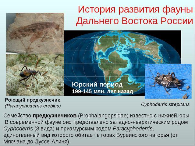 История развития фауны Дальнего Востока России Семейство предкузнечиков (Prop...