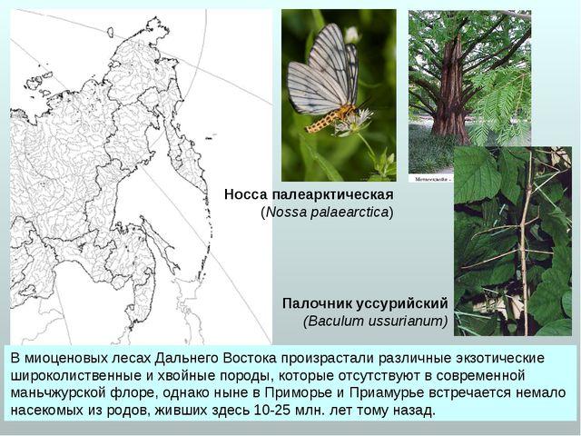 В миоценовых лесах Дальнего Востока произрастали различные экзотические широк...