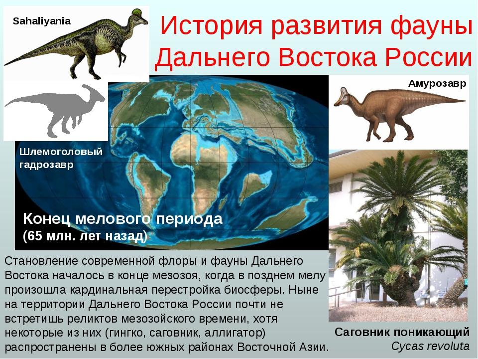 История развития фауны Дальнего Востока России Становление современной флоры...