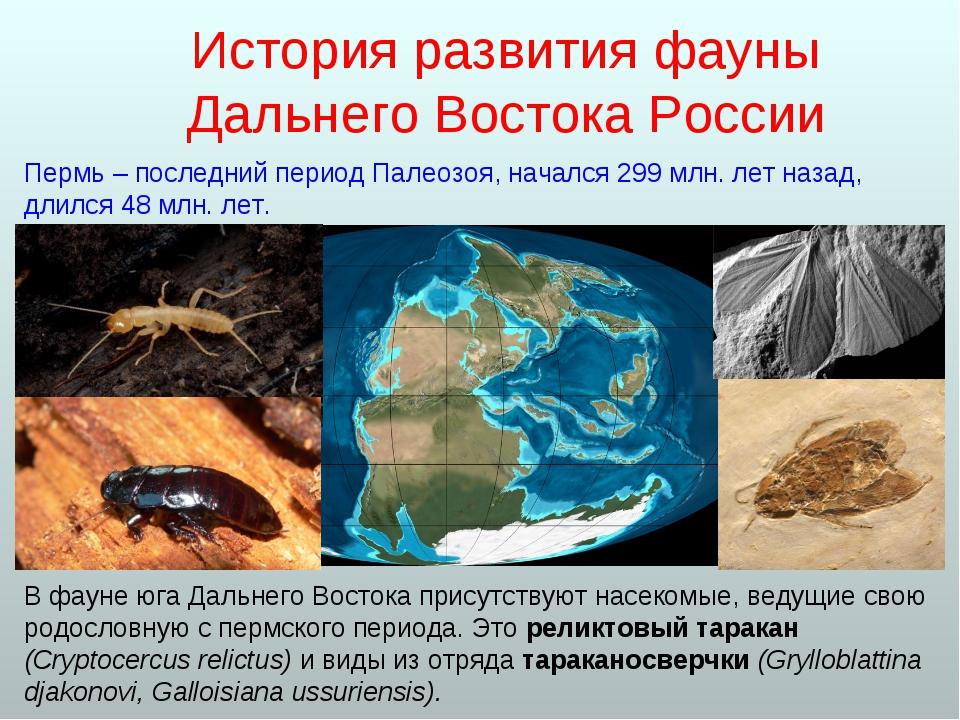 В фауне юга Дальнего Востока присутствуют насекомые, ведущие свою родословную...