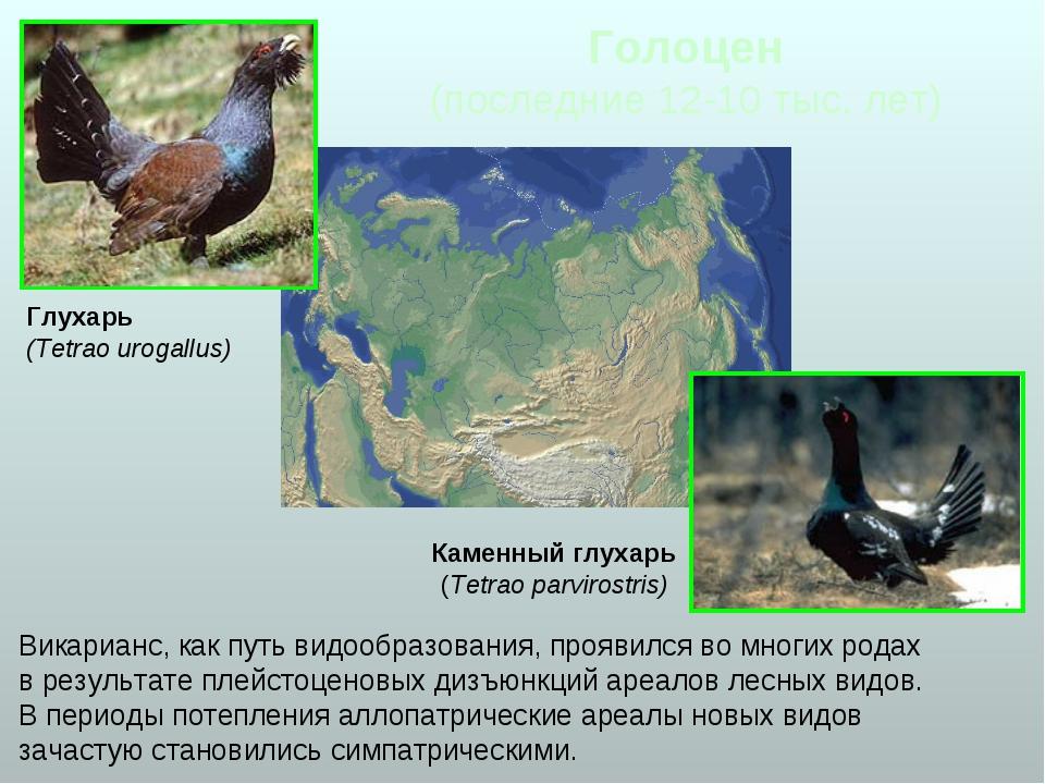 Голоцен (последние 12-10 тыс. лет) Викарианс, как путь видообразования, прояв...
