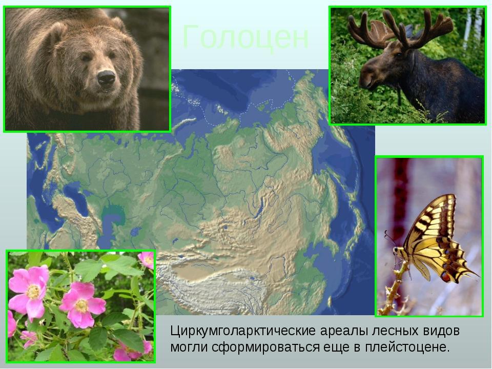 Голоцен Циркумголарктические ареалы лесных видов могли сформироваться еще в п...