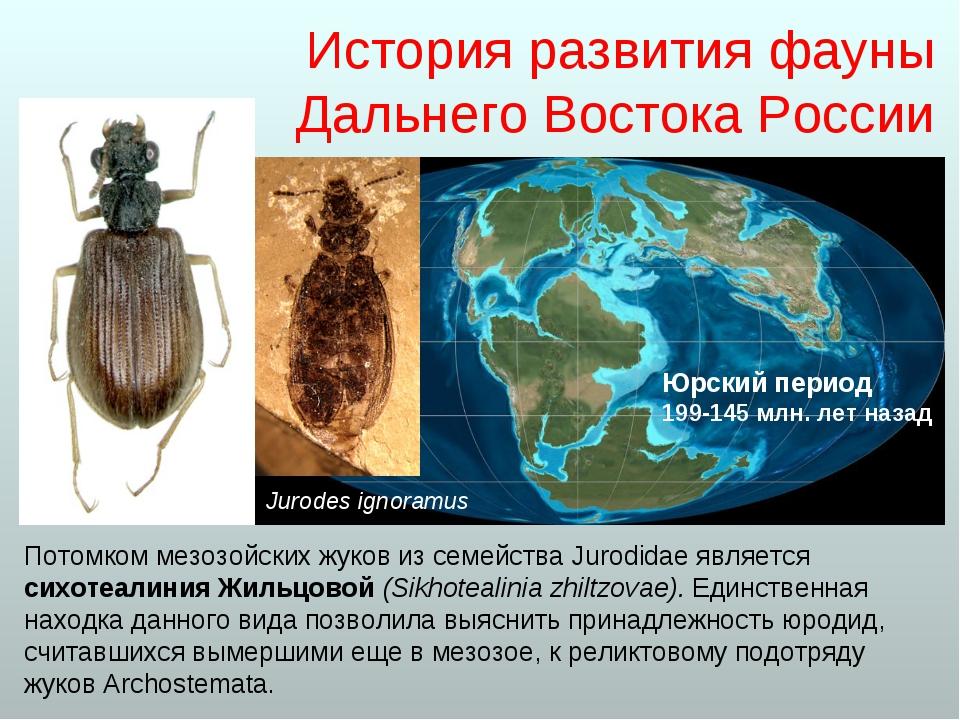История развития фауны Дальнего Востока России Потомком мезозойских жуков из...