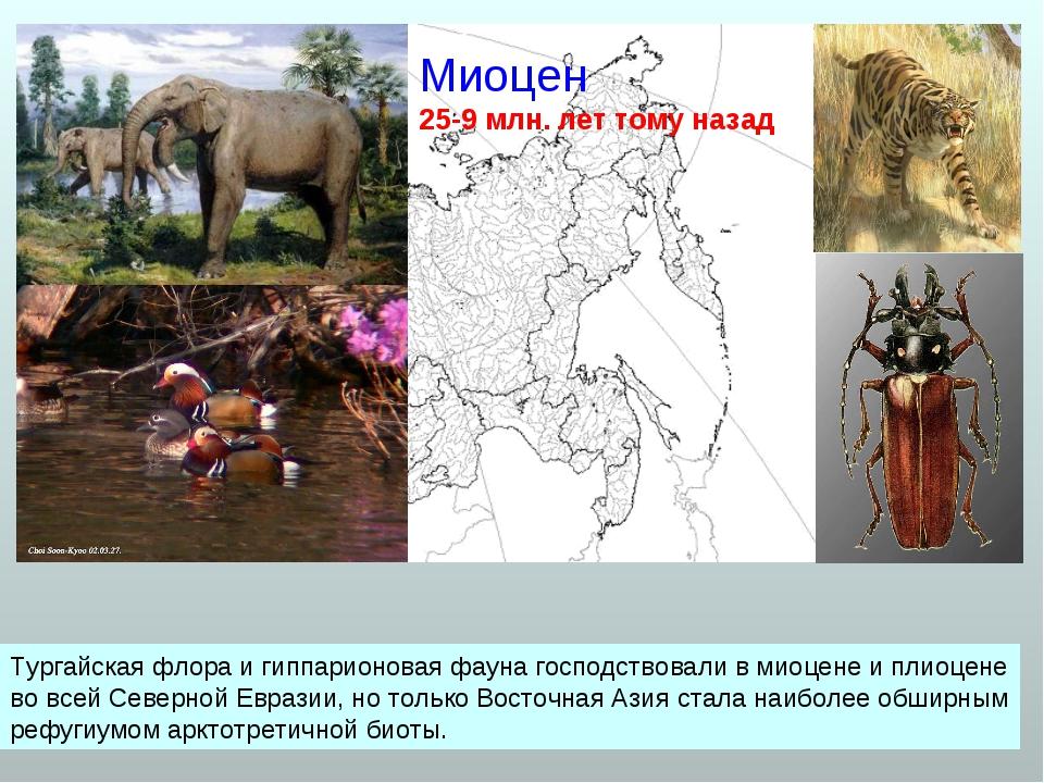 Миоцен 25-9 млн. лет тому назад Тургайская флора и гиппарионовая фауна господ...