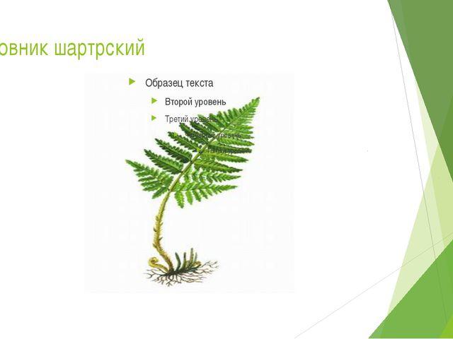 Щитовник шартрский