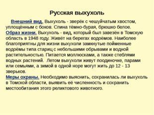 Русская выхухоль Внешний вид.Выхухоль - зверёк с чешуйчатым хвостом, уплощён