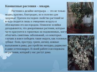 Комнатные растения - лекари.  Растения в дизайне интерьера — это не то