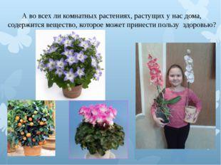 А во всех ли комнатных растениях, растущих у нас дома, содержится вещество, к