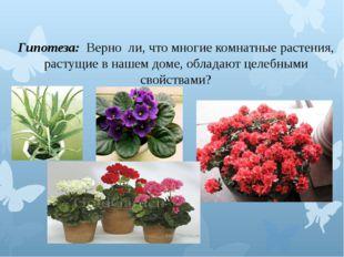 Гипотеза: Верно ли, что многие комнатные растения, растущие в нашем доме, об