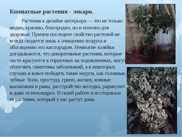 Комнатные растения - лекари.  Растения в дизайне интерьера — это не то...