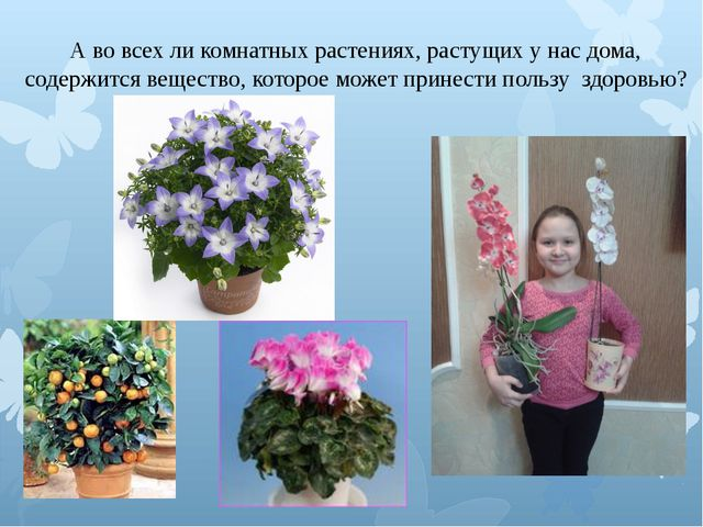 А во всех ли комнатных растениях, растущих у нас дома, содержится вещество, к...