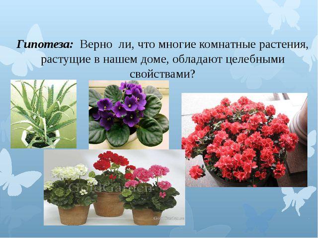 Гипотеза: Верно ли, что многие комнатные растения, растущие в нашем доме, об...