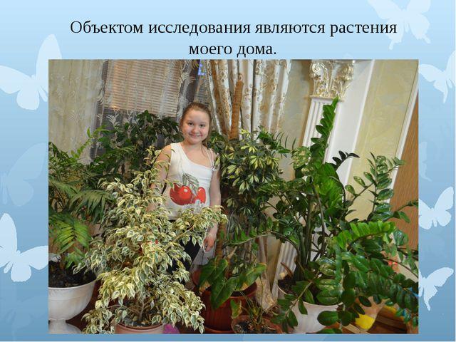 Объектом исследования являются растения моего дома.