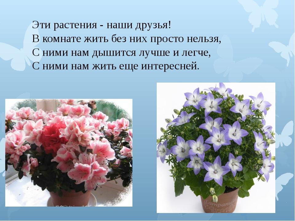 Эти растения - наши друзья! В комнате жить без них просто нельзя, С ними нам...