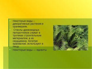 Некоторые виды – декоративные растения в оранжереях. Стволы древовидных папор