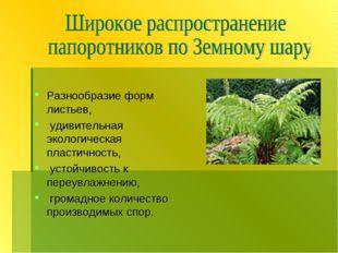 Разнообразие форм листьев, удивительная экологическая пластичность, устойчив