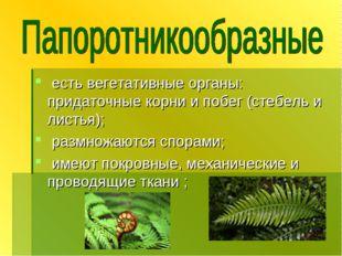 есть вегетативные органы: придаточные корни и побег (стебель и листья); разм