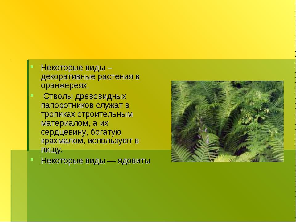 Некоторые виды – декоративные растения в оранжереях. Стволы древовидных папор...