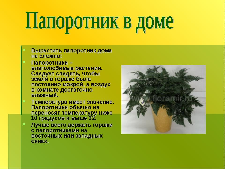 Вырастить папоротник дома не сложно: Папоротники – влаголюбивые растения. Сле...