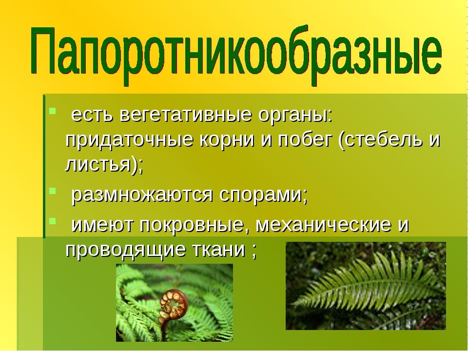 есть вегетативные органы: придаточные корни и побег (стебель и листья); разм...