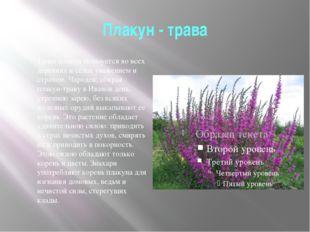 Плакун - трава Трава плакун пользуется во всех деревнях и селах уважением и с