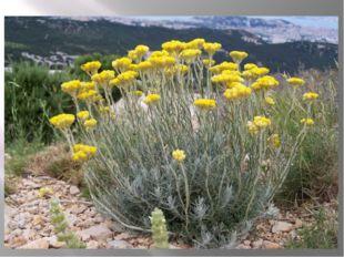 Трава нечуй-ветер Трава нечуй-ветер, растет зимою по берегам и озерам. Кто об